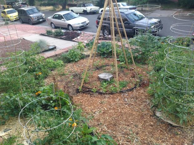 July 10th garden